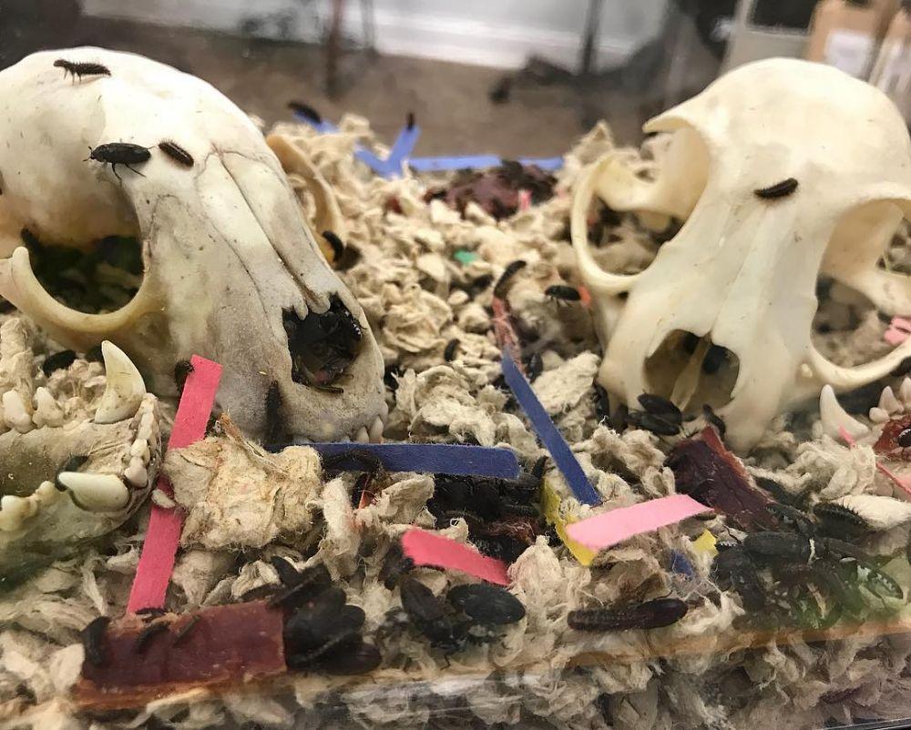 SKELETONS: Museum Of Osteology - Orlando Webpagedepot