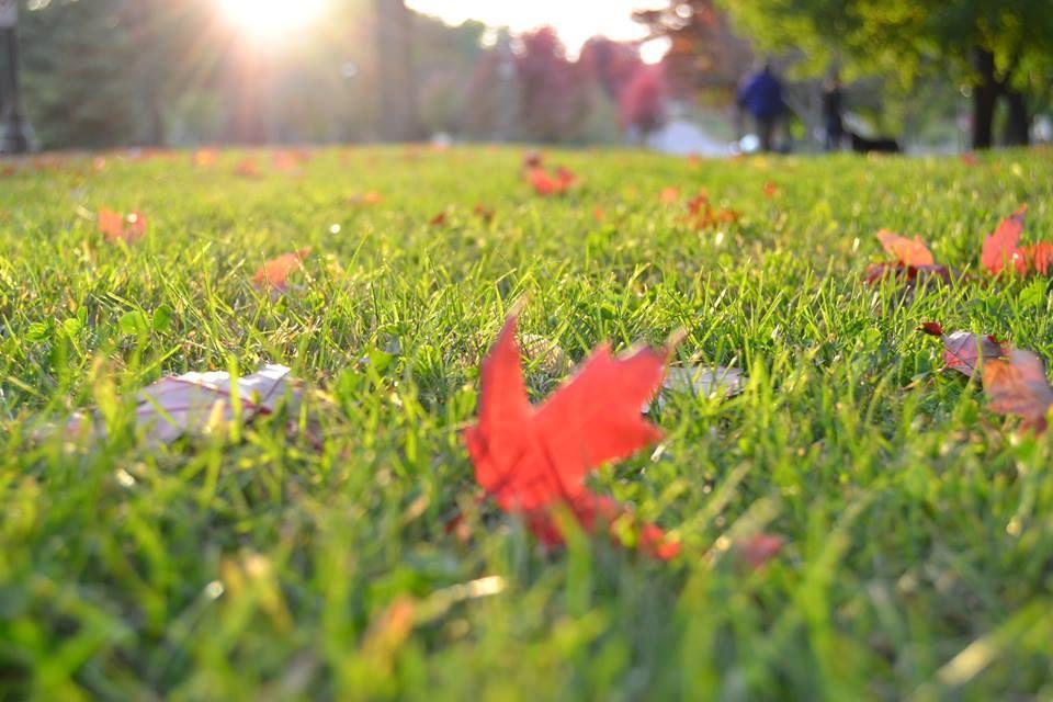 Massey Services Pest Prevention - Orlando Documentation